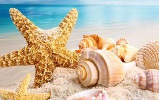 Seastar and Shells